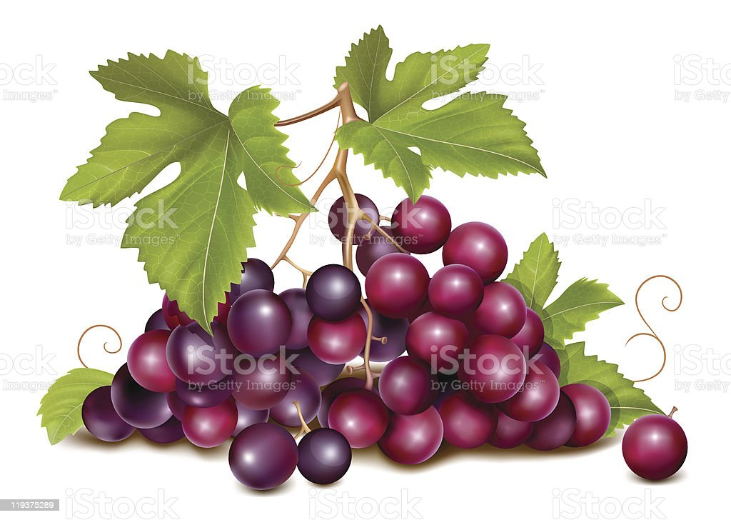 A bunch of purple grapes with green leaves royalty-free stock vector art