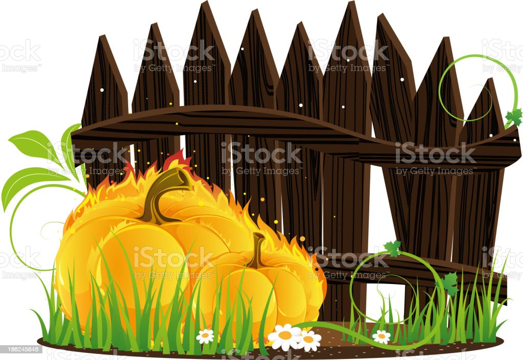 Burning pumpkins against a wooden fence royalty-free stock vector art