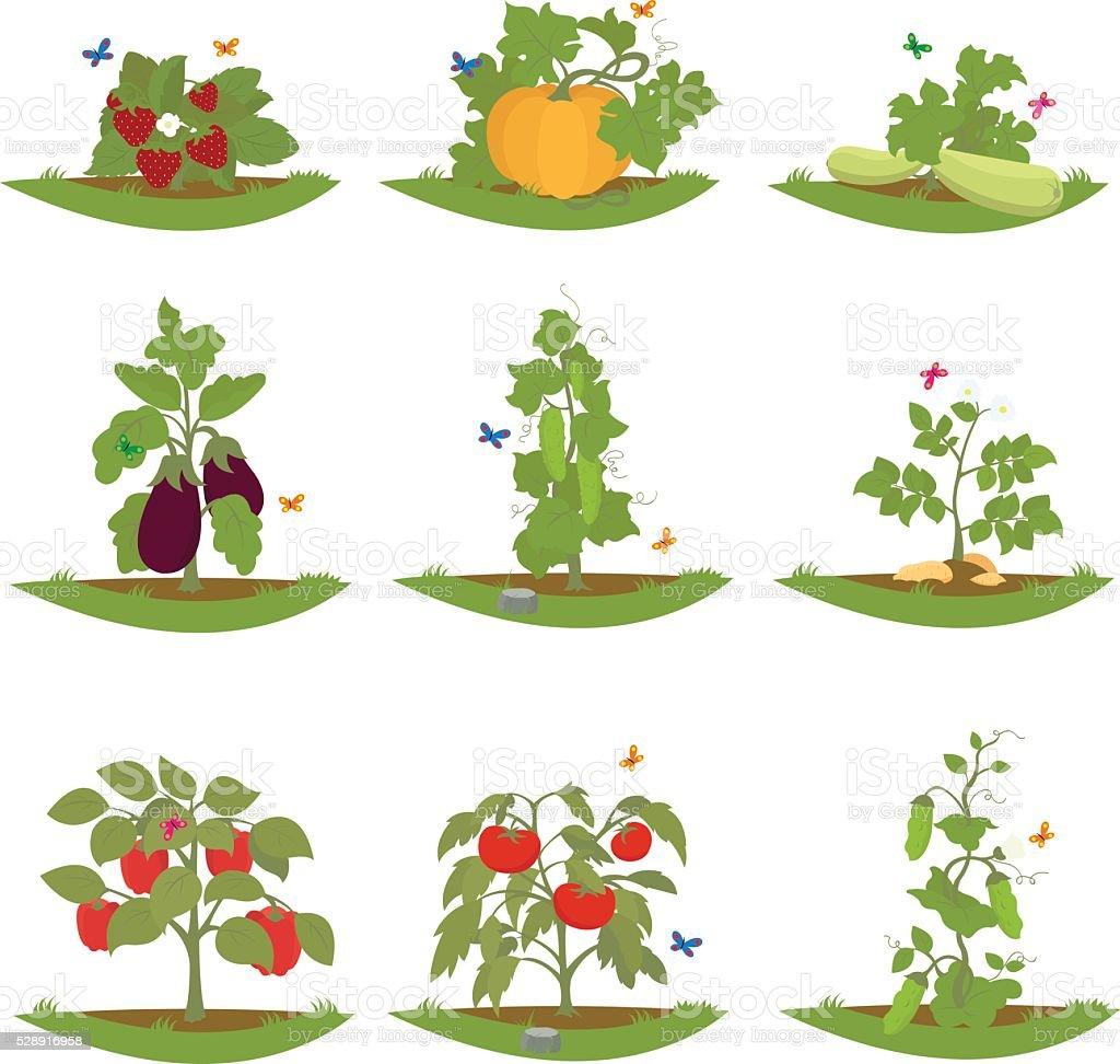 bush fruit-bearing plants. vector art illustration