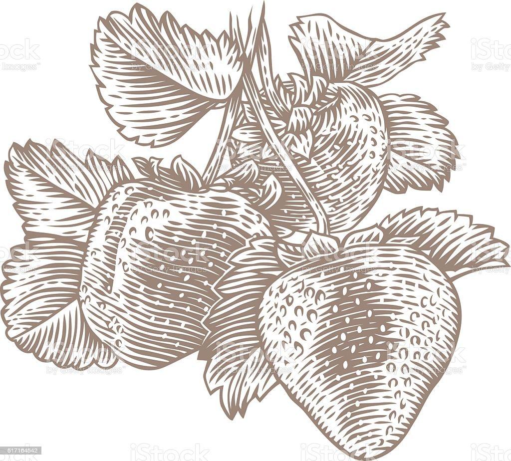 Bush of strawberry vector art illustration