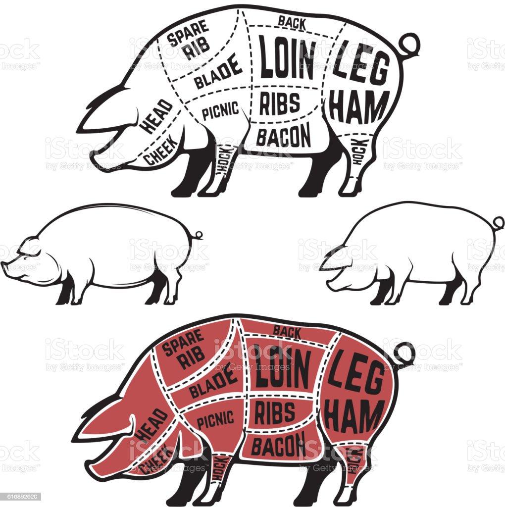 Butcher diagram, scheme and guide - Pork cuts. vector art illustration