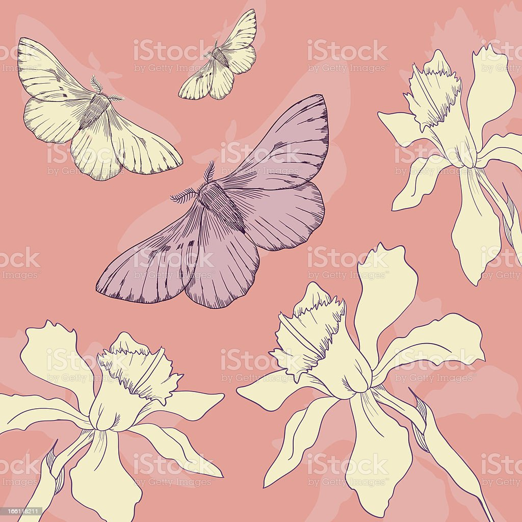 butterflies and narcissus royalty-free stock vector art