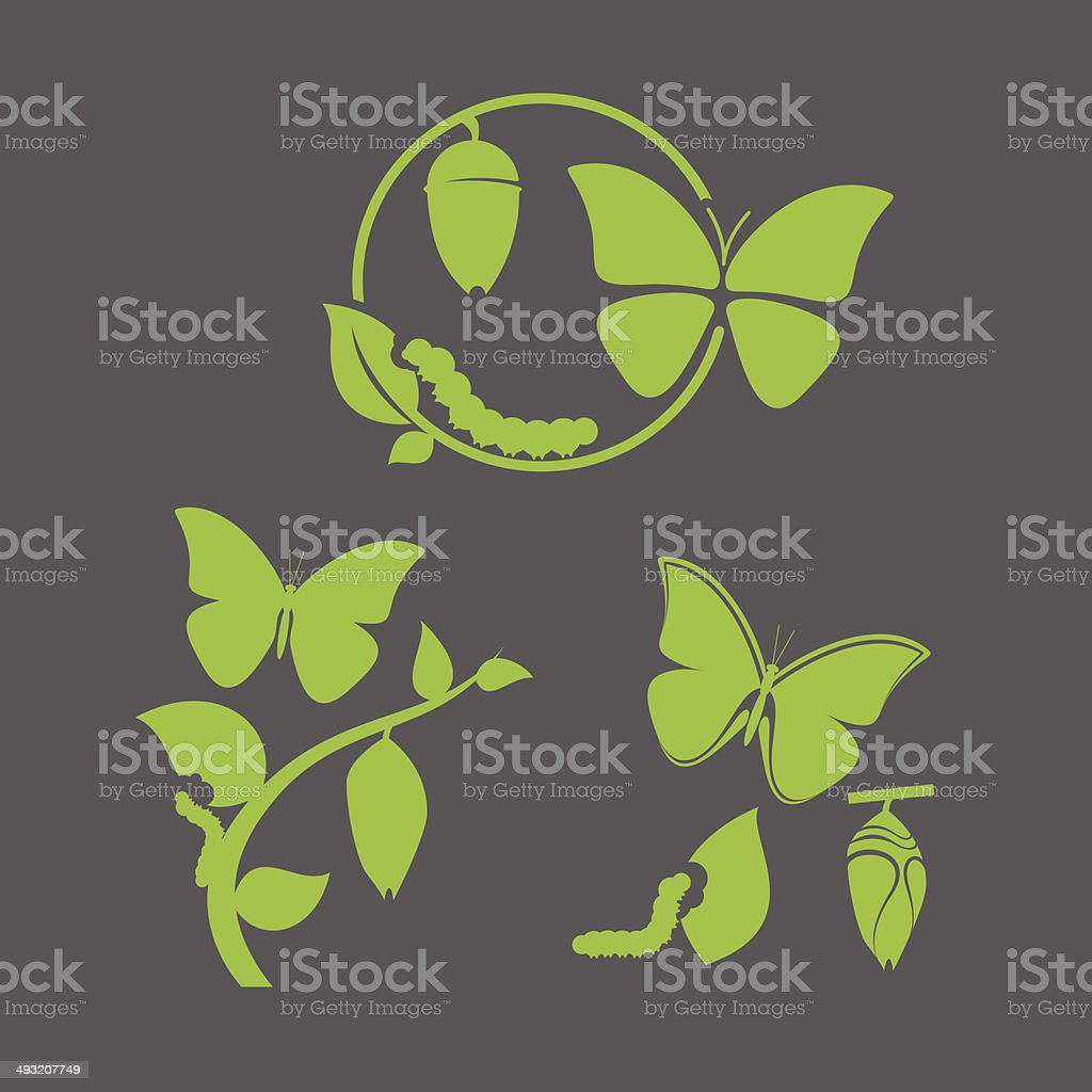 Butterfly cycle vector art illustration