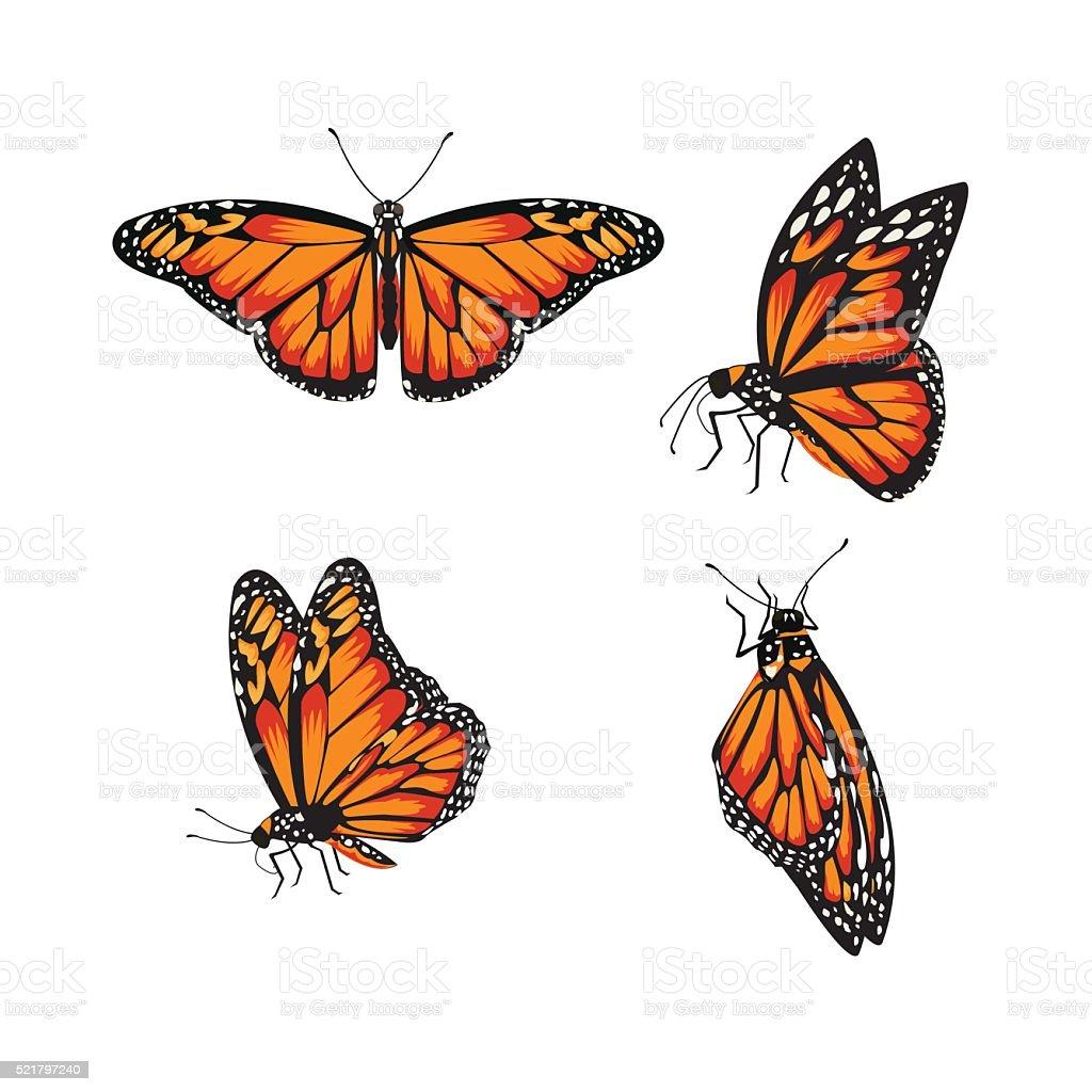 butterfly Monarch Butterfly, Danaus plexippus vector art illustration