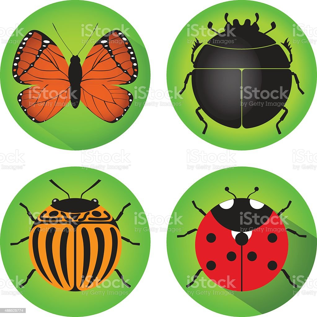 Butterfly, scarab beetle, Colorado potato beetle, ladybug. vector art illustration