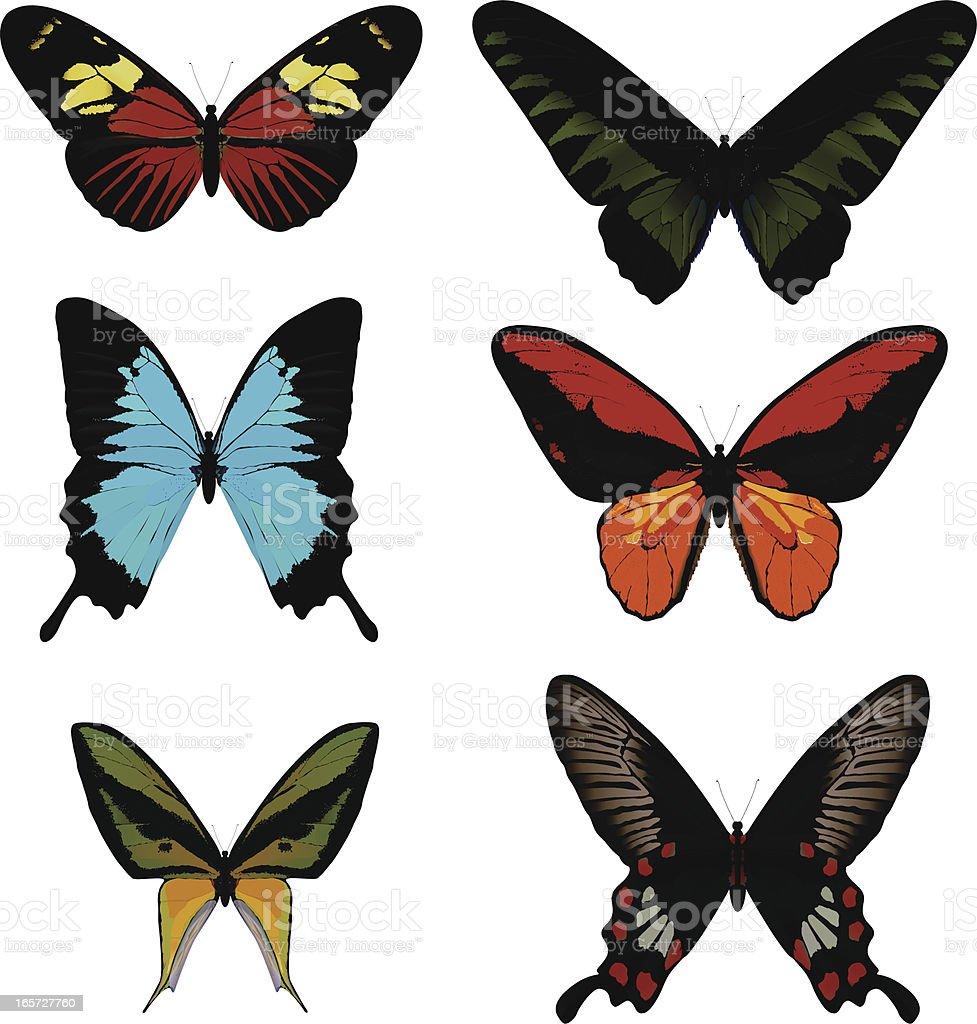 Butterfly Set vector art illustration