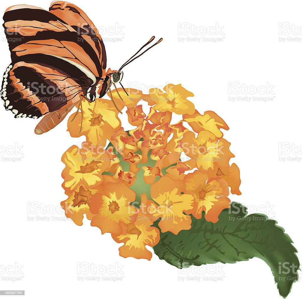 Butterfly sitting on flower royalty-free stock vector art