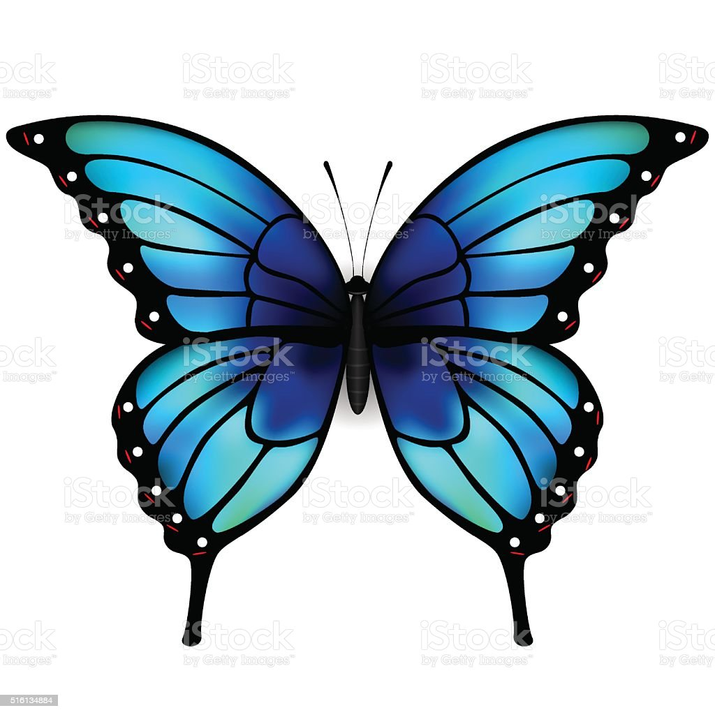 Butterfly with big blue wings on white background. vector art illustration