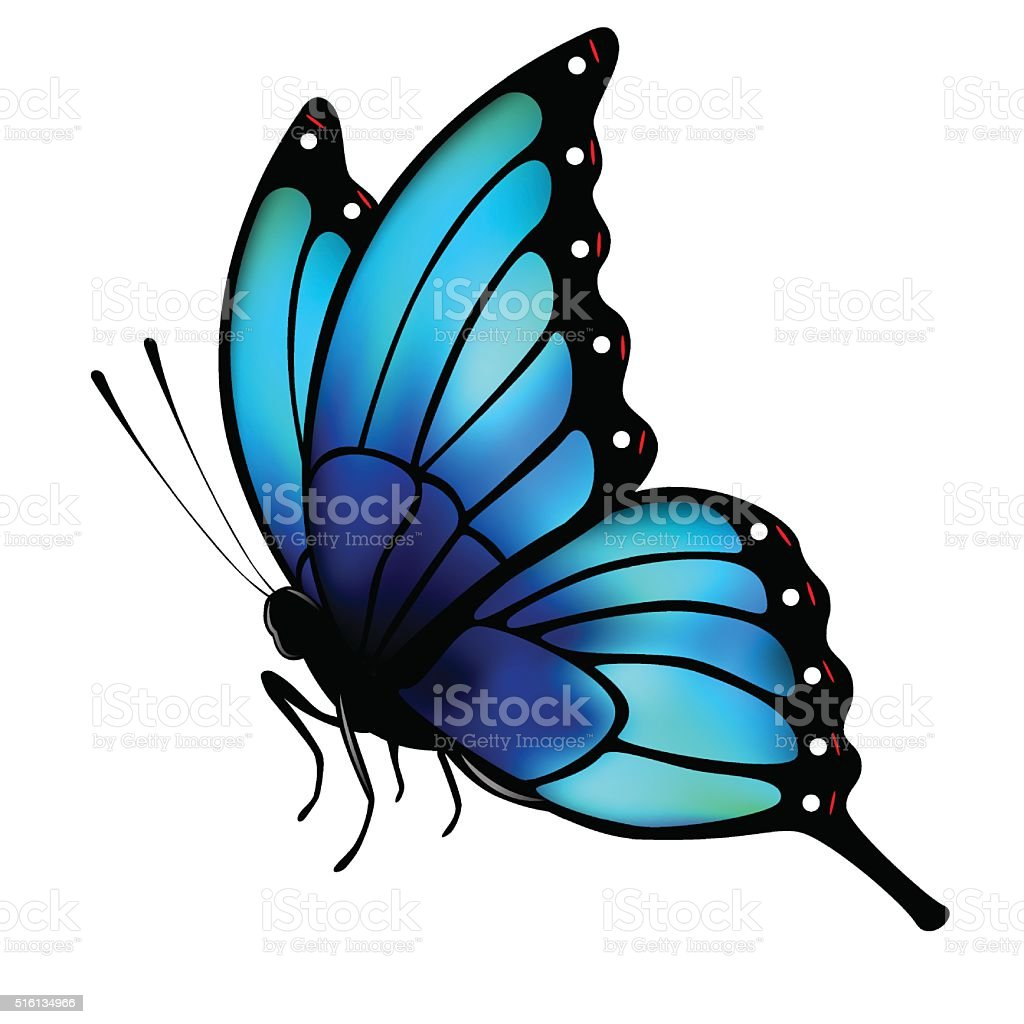 butterfly with big blue wings on white background stock vector art