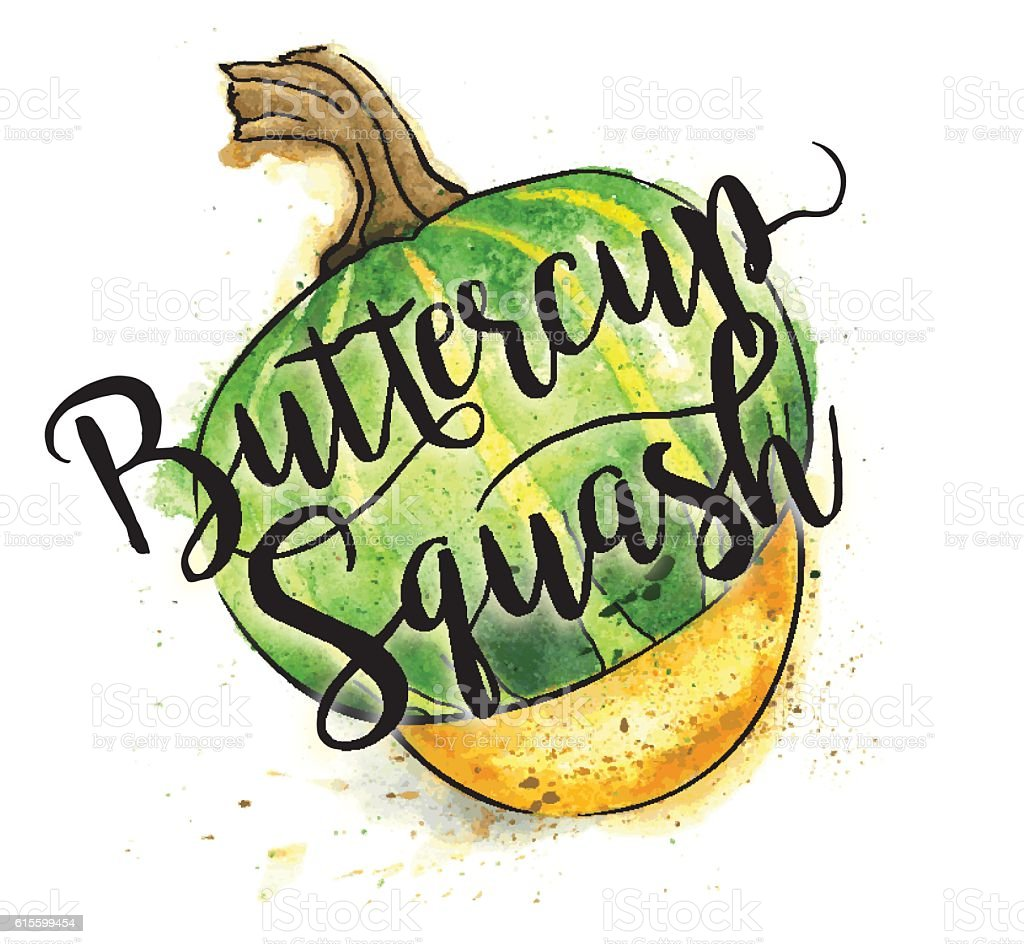 Butternut Squash Painted in Watercolor With Text - Vector Illustration vector art illustration