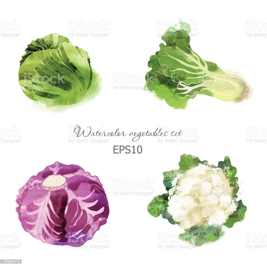 cabbage, lettuce, red cabbage,  cauliflower vector art illustration