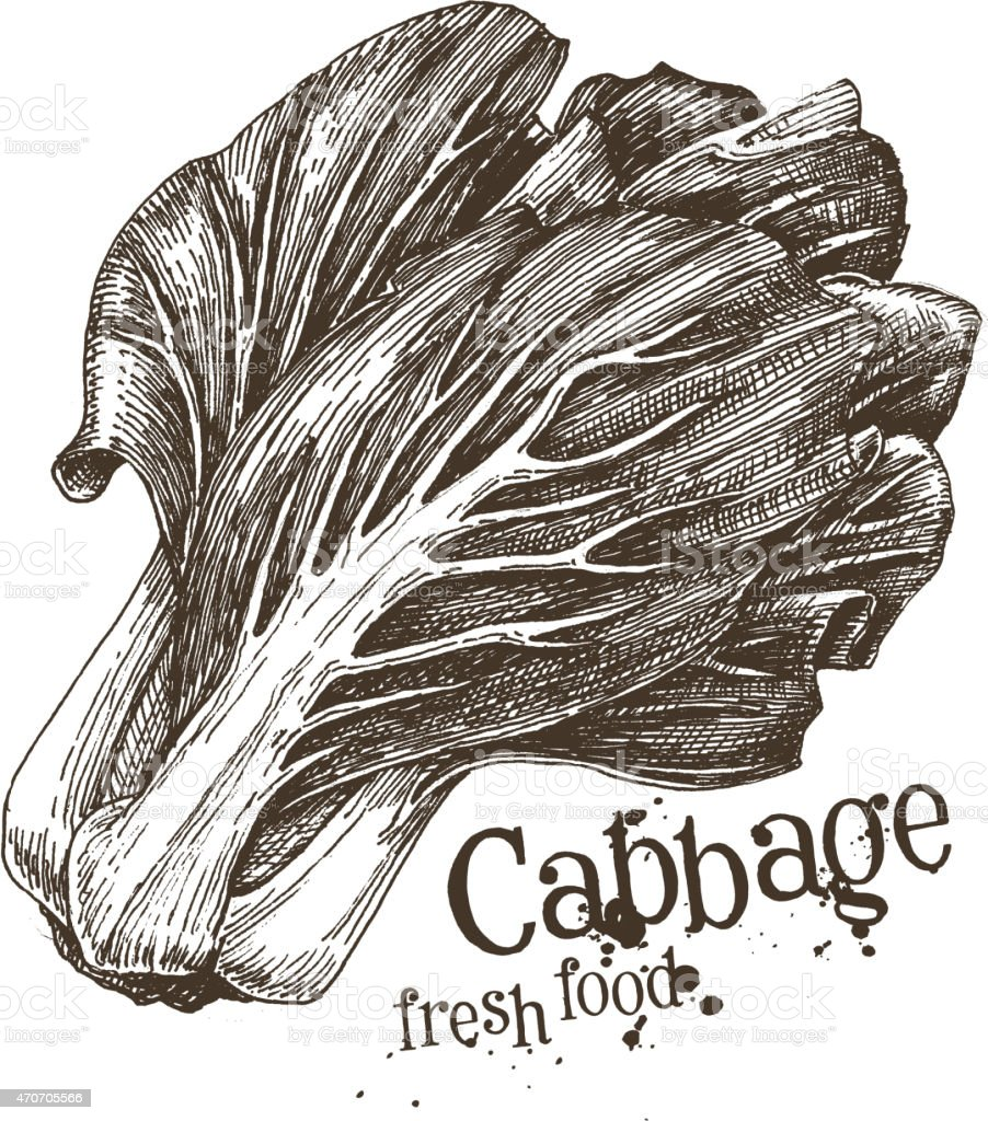 cabbage vector logo design template. fresh vegetables, food or harvest vector art illustration