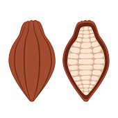 Cacao beans, brown organic plant, fruit of chocolate. Flat style