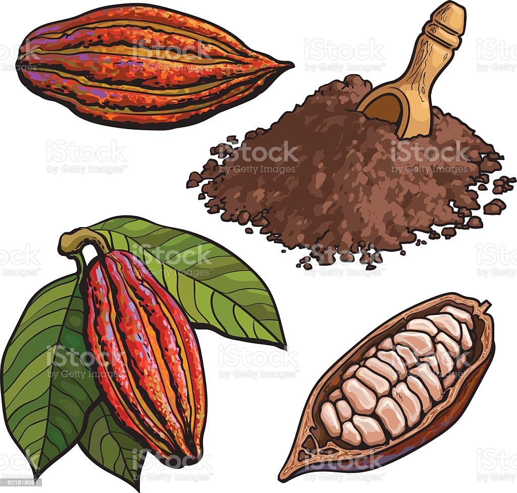 Cacao fruit, beans and powder, set of style vector illustrations vector art illustration
