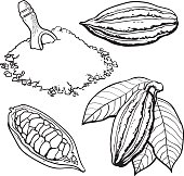 Cacao fruit, beans and powder, set of style vector illustrations