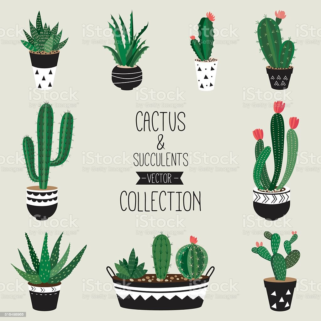 Cacti and succulents vector collection vector art illustration