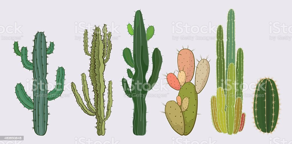 Cactus collection vector art illustration