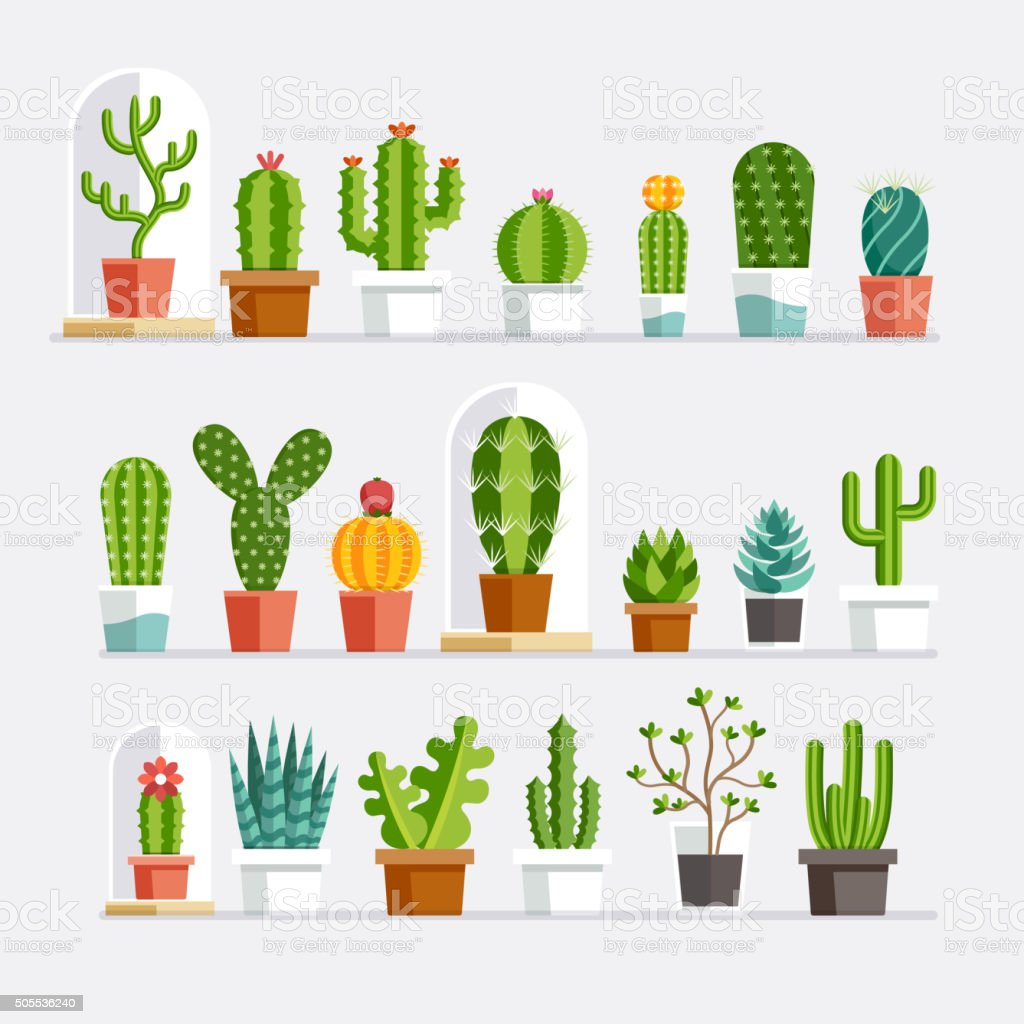 Cactus flat style. vector art illustration