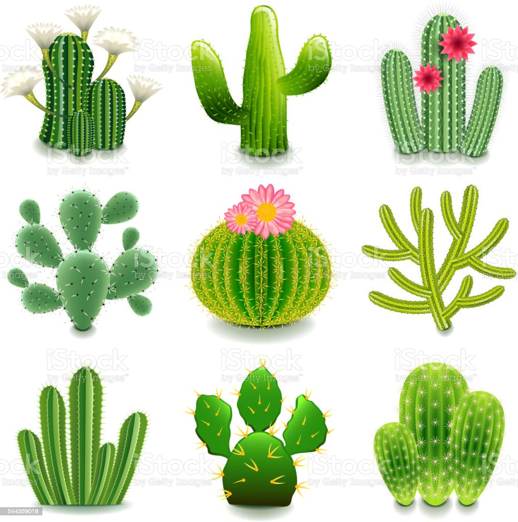 Cactus icons vector set illustracion libre de derechos for Cactus imagenes