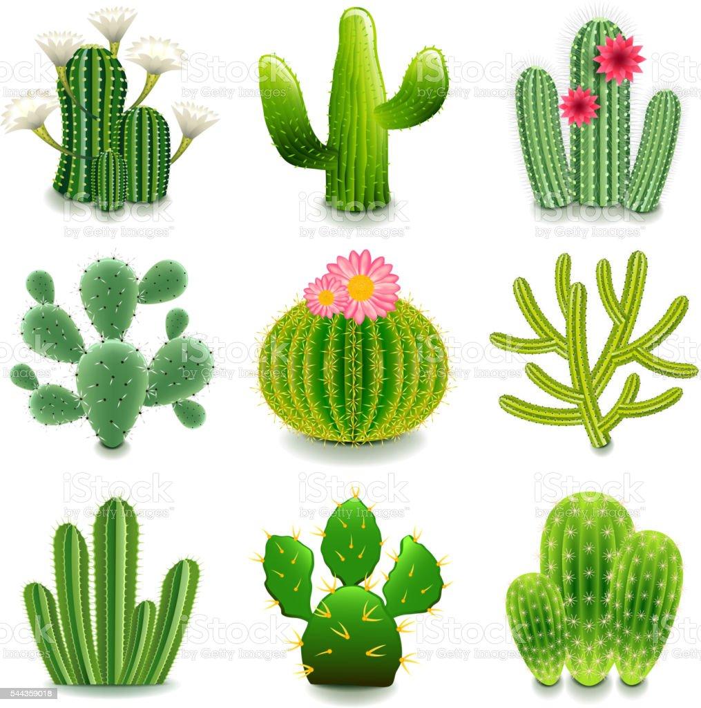 Cactus icons vector set illustracion libre de derechos for Fotos de cactus