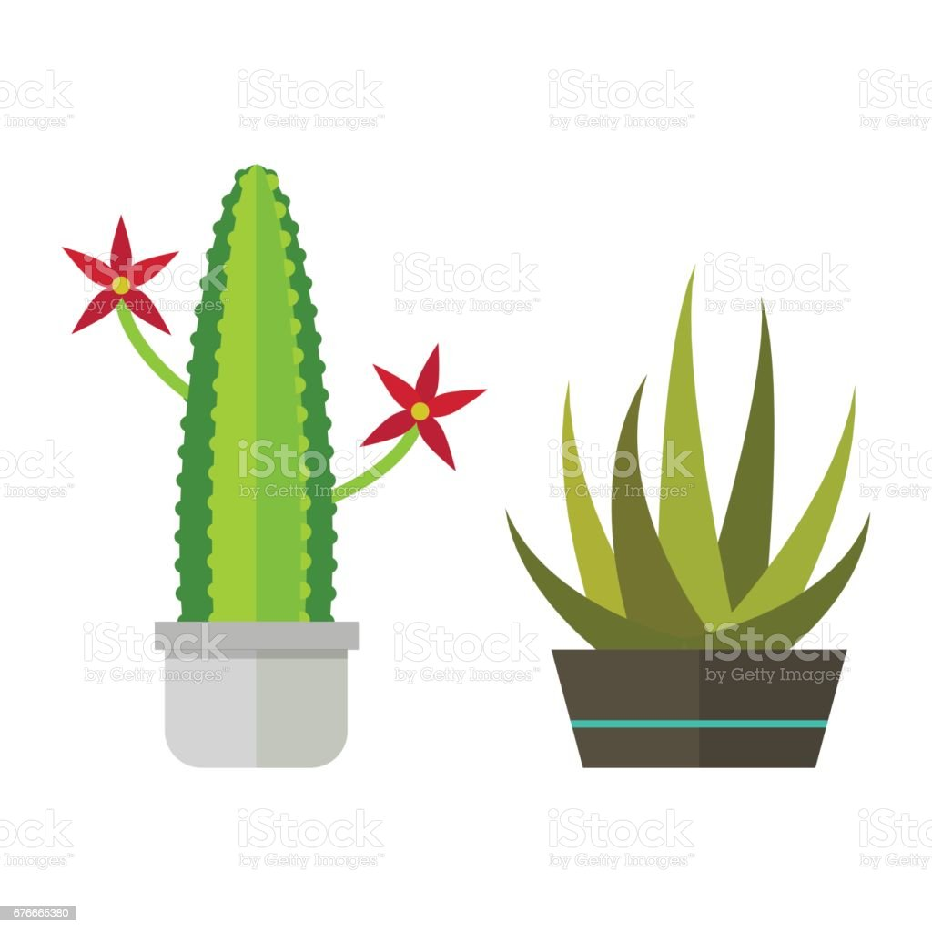 Cactus nature desert flower green mexican succulent tropical plant cacti floral vector illustration vector art illustration