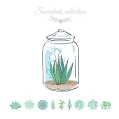 cactus plant in a glass jar