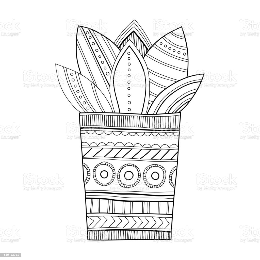 cactus succulent black and white illustration for coloring books