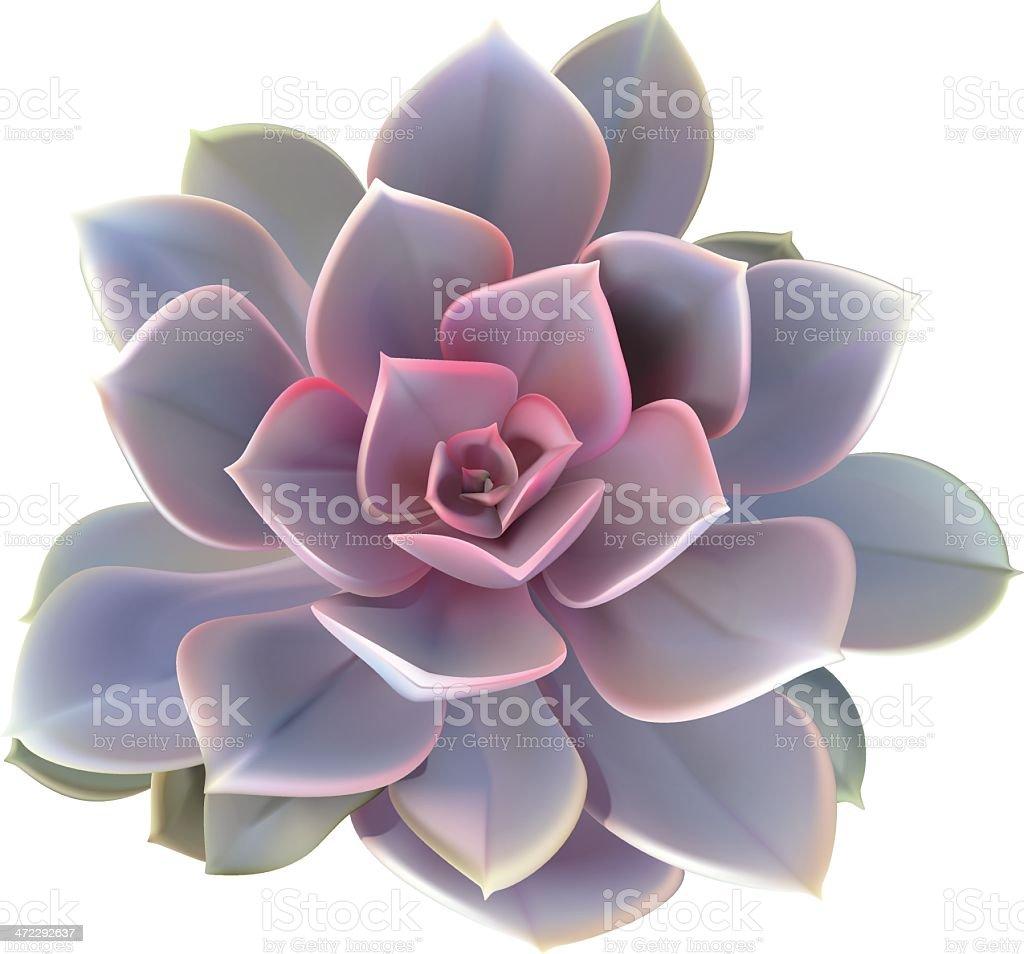 Cactus Succulent Plant - Vector Illustration royalty-free stock vector art