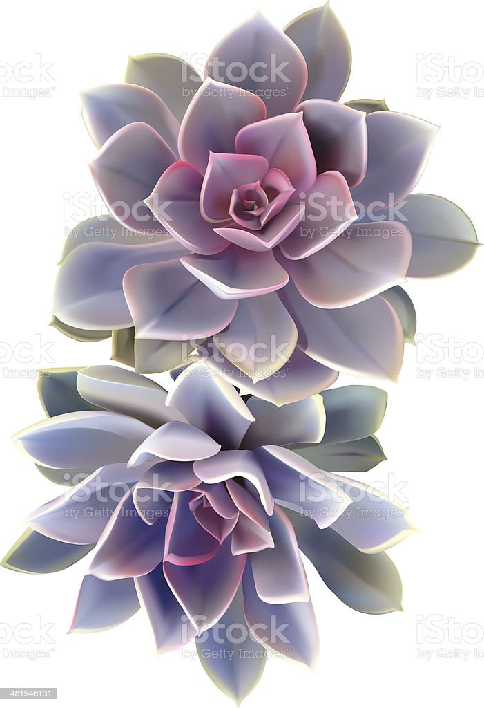 Cactus Succulent Plant - Vector Illustration vector art illustration