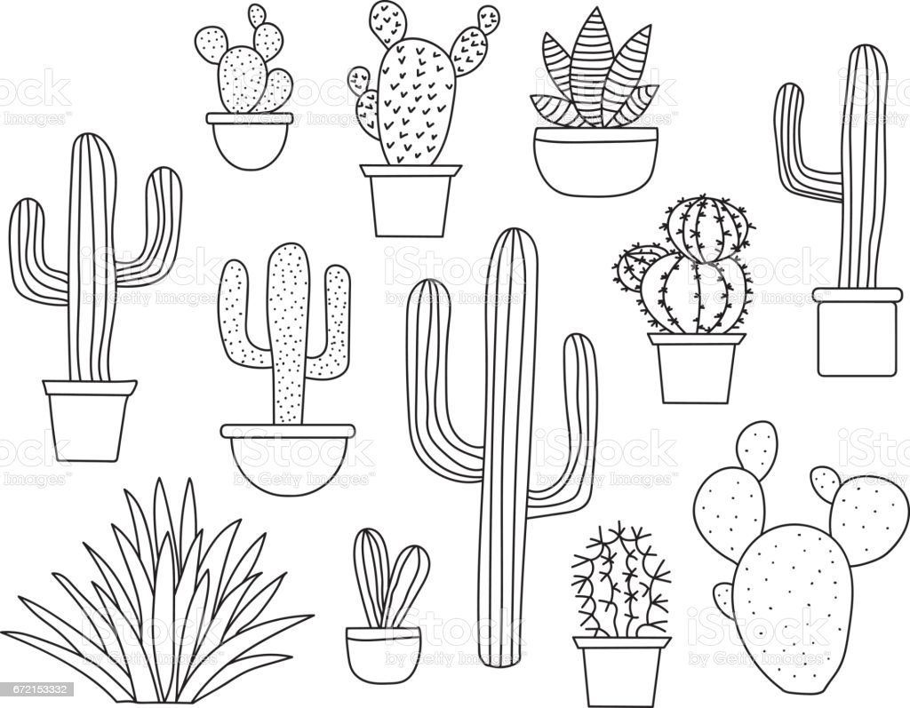 Line Drawing Cactus : Cactus vector set hand drawn collection of various