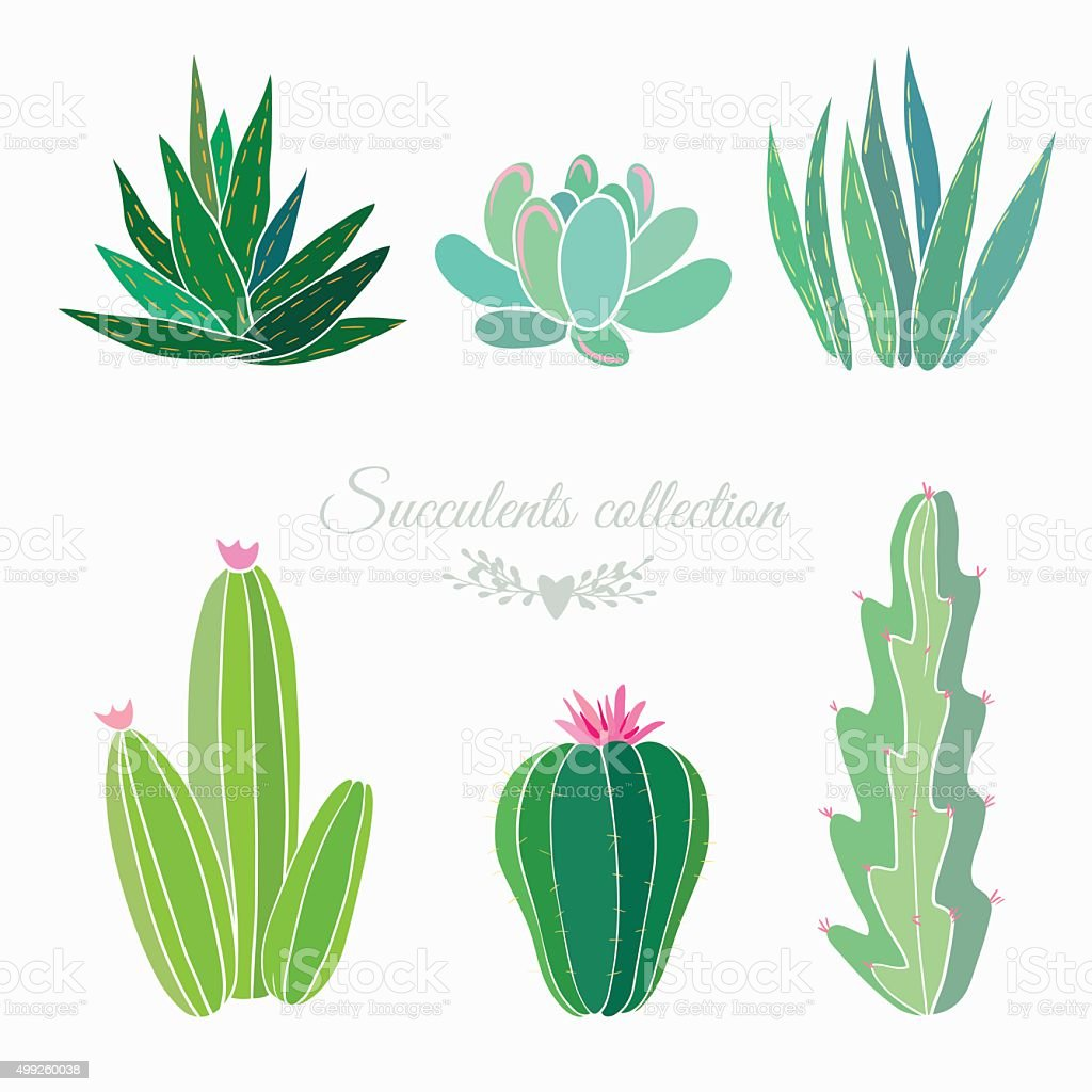 cactuses and succulents vector art illustration