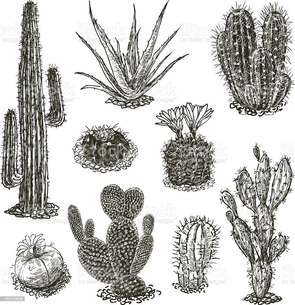 cactuses vector art illustration