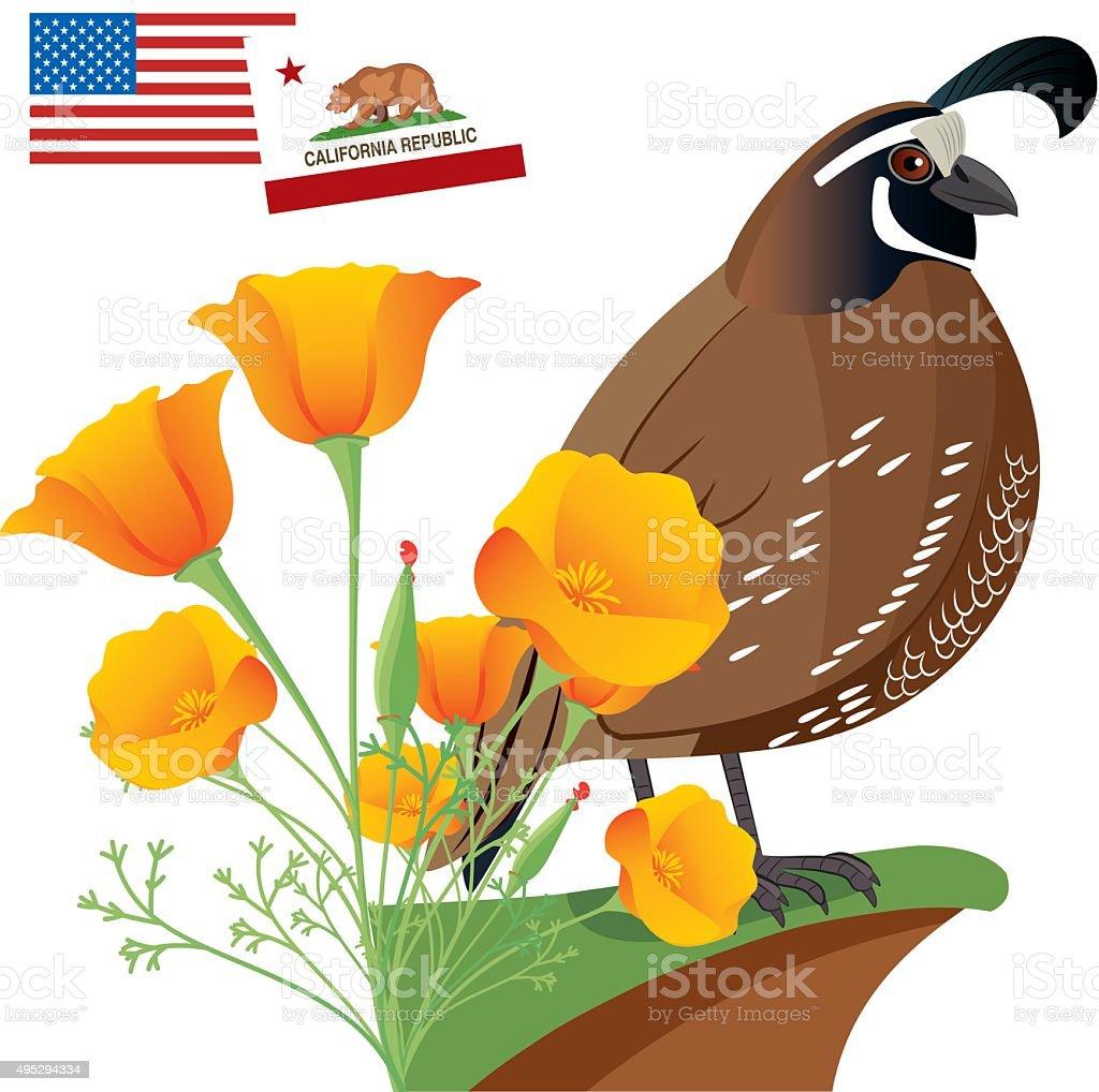 California Golden Poppy vector art illustration