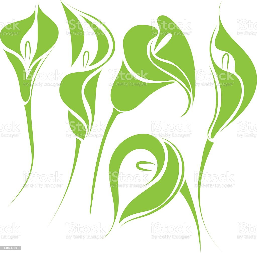 calla lilies vector art illustration
