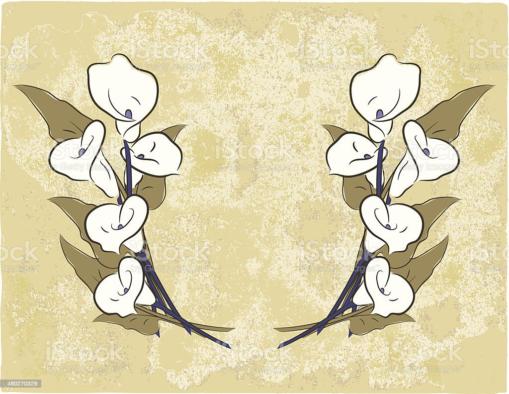 Calla Lillies on Grunge vector art illustration