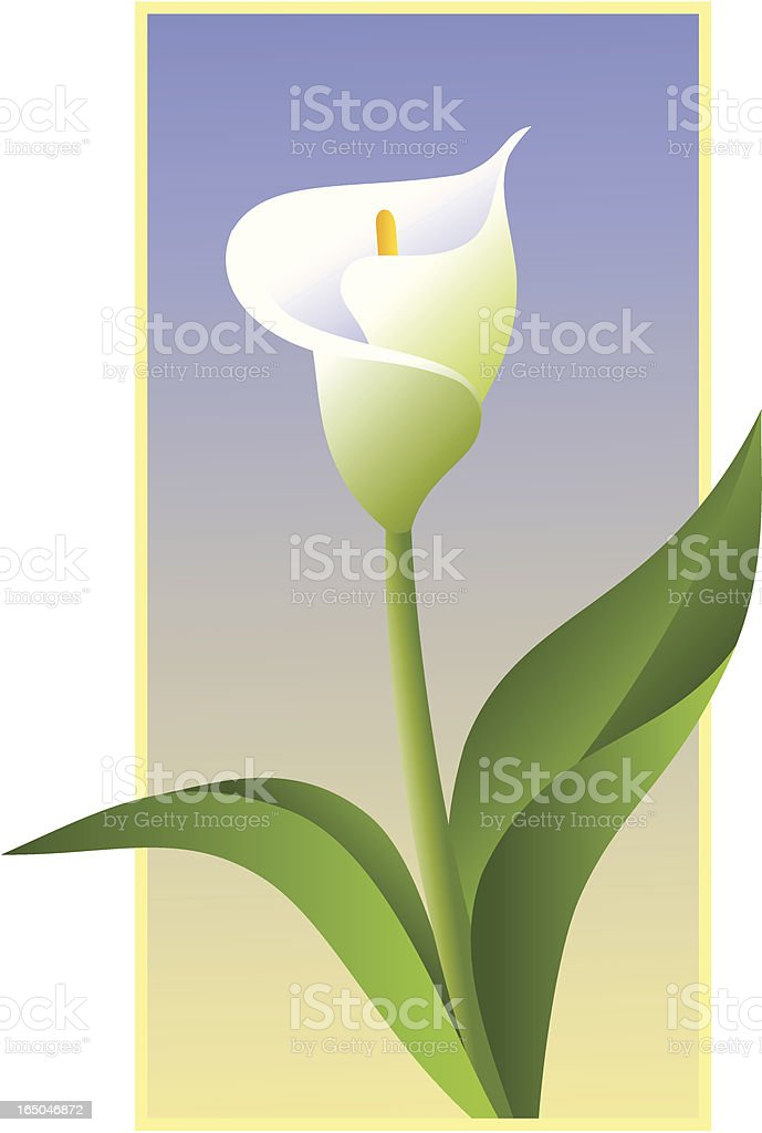 Calla Lilly royalty-free stock vector art