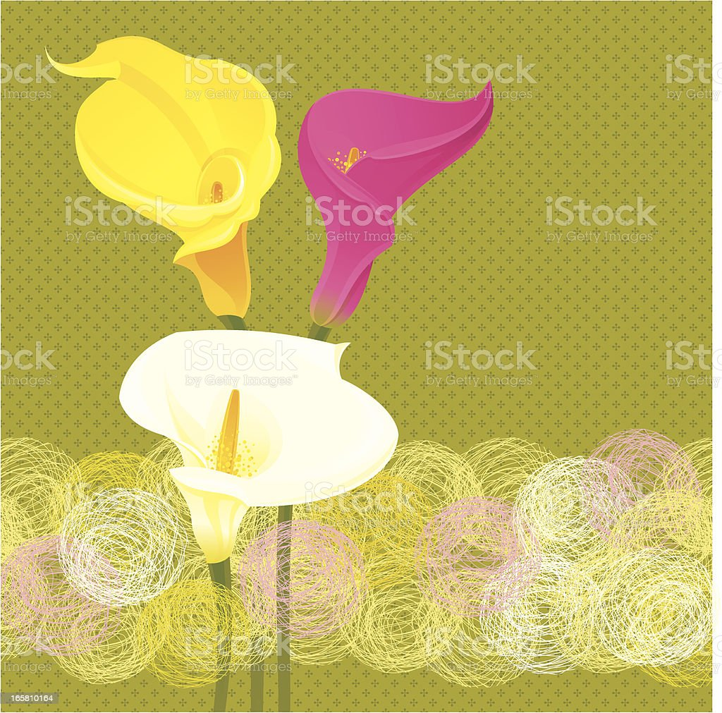 Calla Lily Invitation royalty-free stock vector art