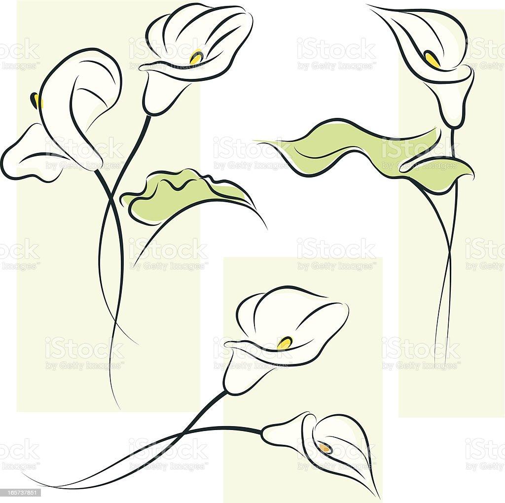 Calla lily royalty-free stock vector art