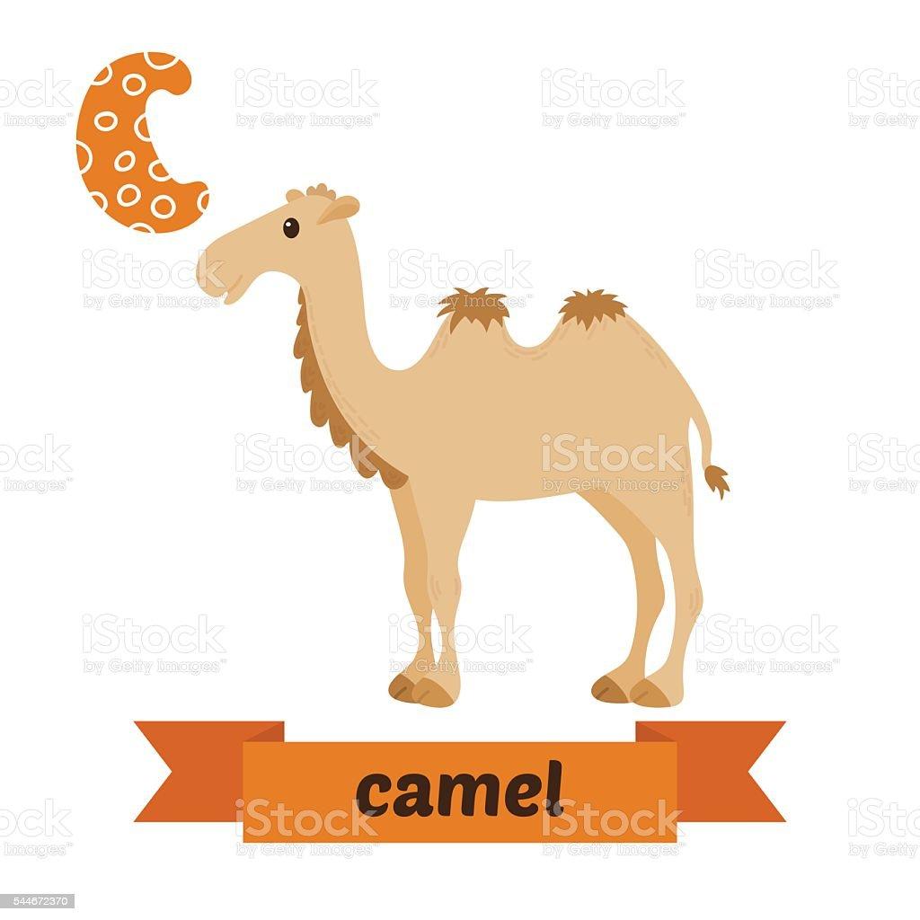 Camel. C letter. Cute children animal alphabet in vector. Funny vector art illustration