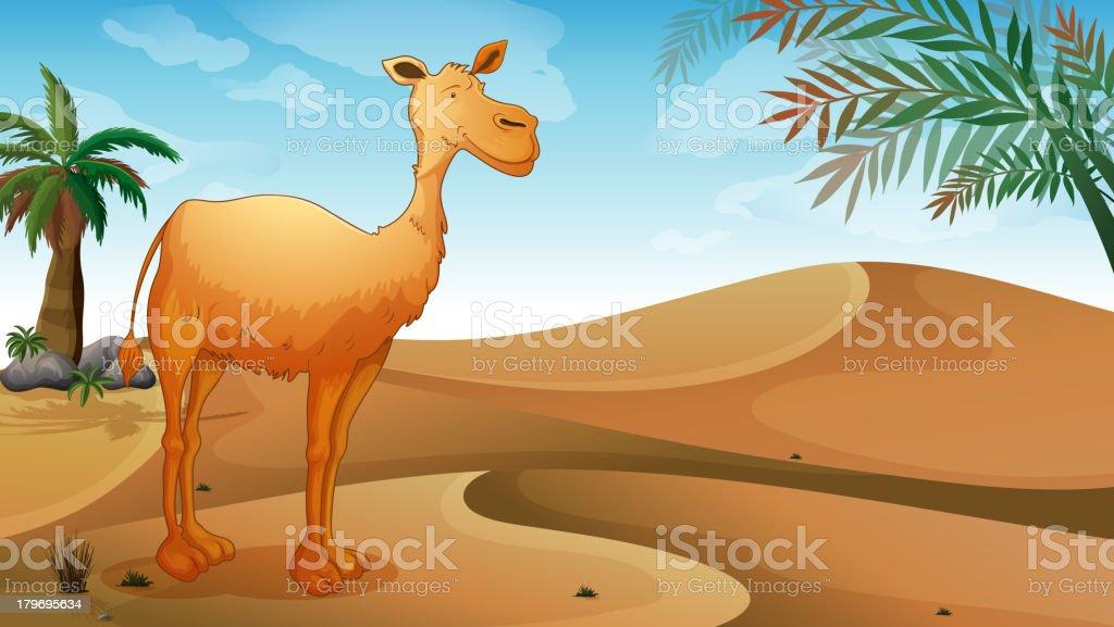 Camel in the desert royalty-free stock vector art
