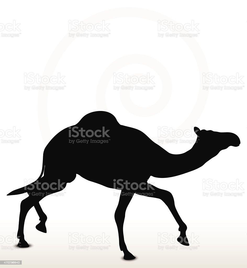 camel in Trotting pose vector art illustration