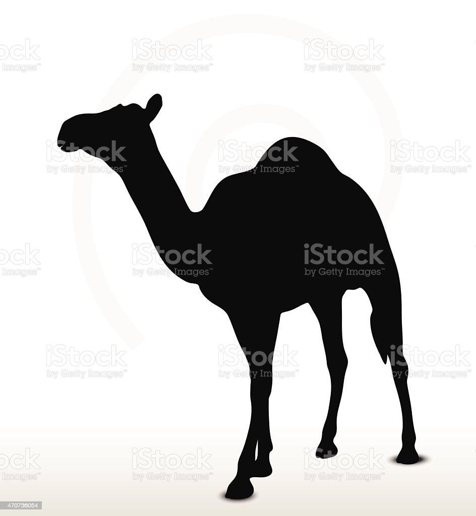 camel in Walking pose vector art illustration