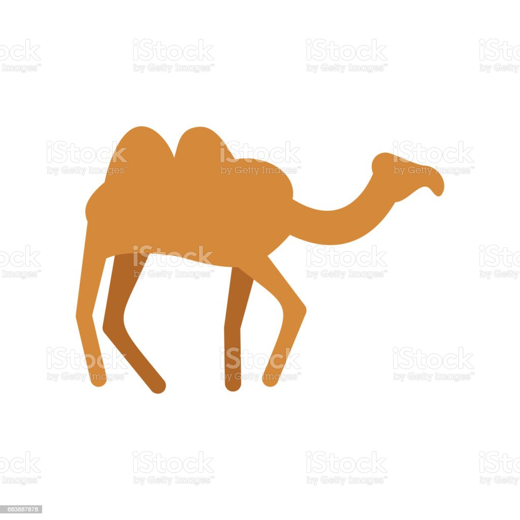 Camel isolated. Desert animals on white background vector art illustration