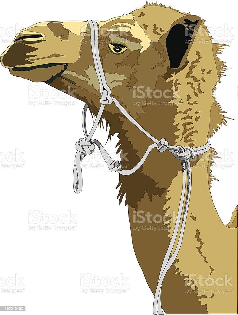 Camel Profile, Close Up royalty-free stock vector art