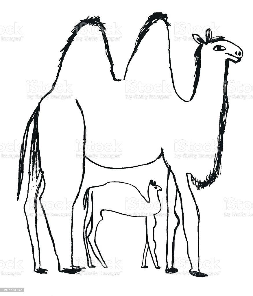 Camels drawing vector art illustration