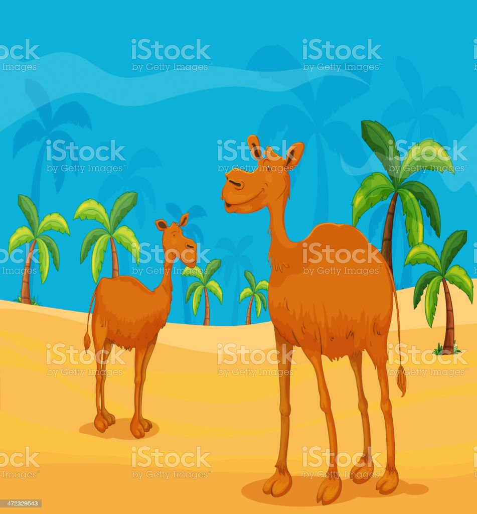 Camels in the dessert royalty-free stock vector art