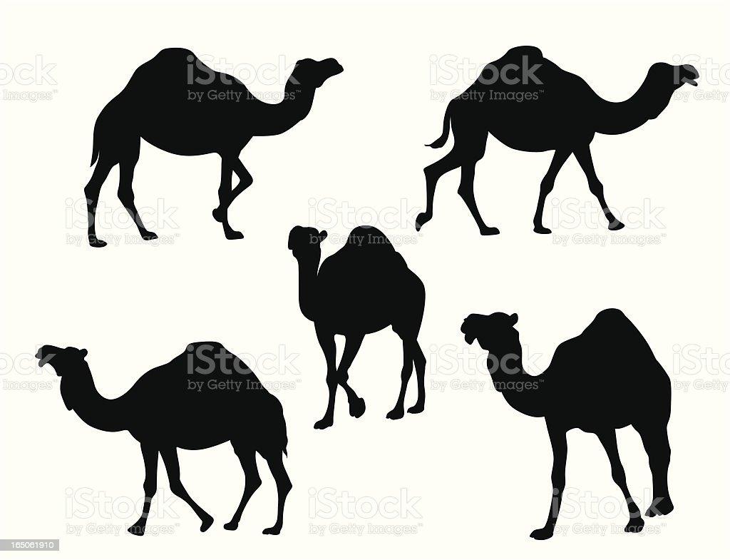 Camels Vector Silhouette vector art illustration