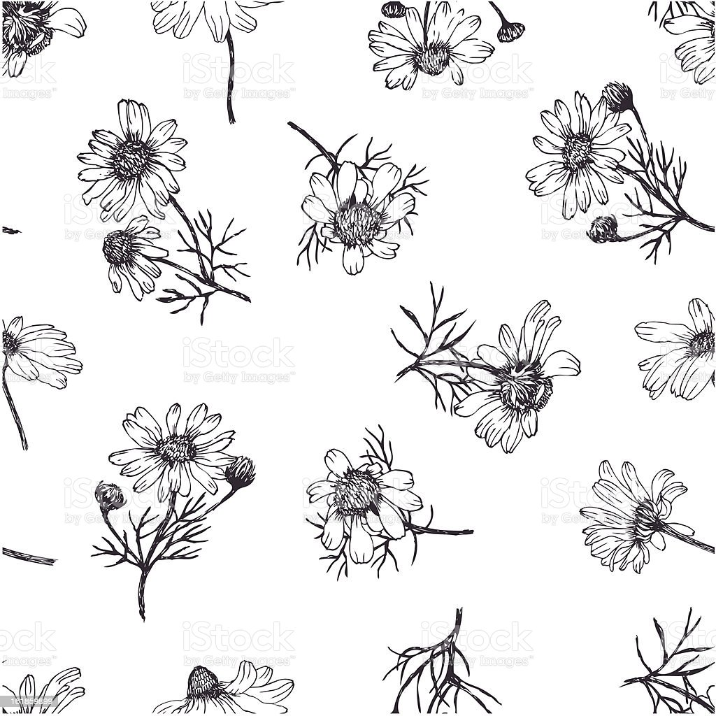 Camomile background vector art illustration