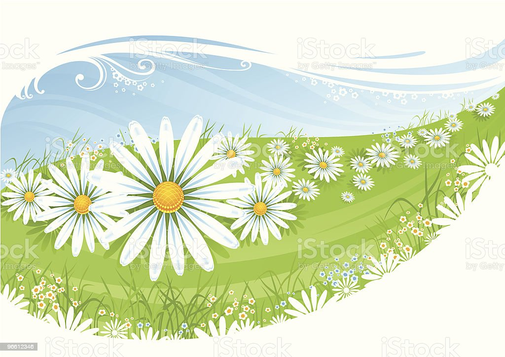 Camomile field royalty-free stock vector art