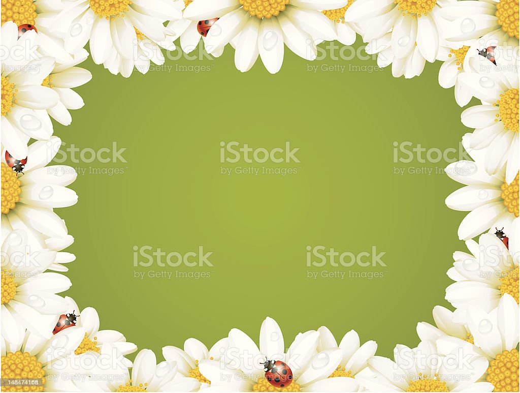 Camomile Floral Frame royalty-free stock vector art